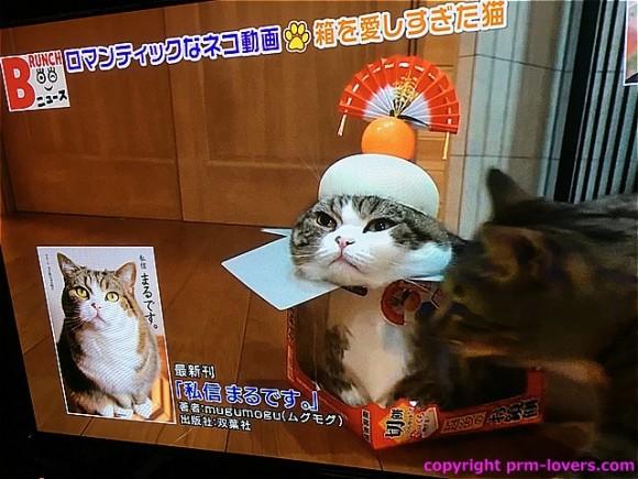 箱入りネコ まるさん