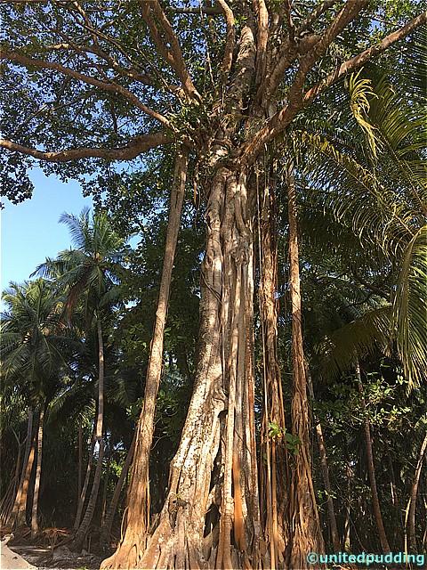 amilla tree